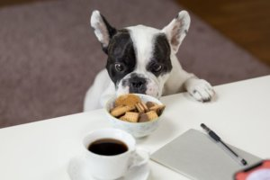 A black and white bulldog with crackers and coffee for a pet article about the humanization of pet food