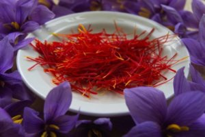 A close up of saffron in a white bowl surrounded by purple crocus flowers for an ingredient article about fine fragrances