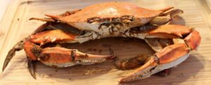 Close up Maryland Crab on wooden cutting board